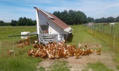 Wiesenhühner vom Zinnerhof - das Hühnermobil